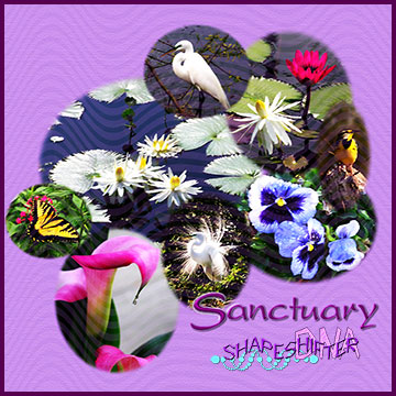 Sanctuary | ShapeshifterDNA