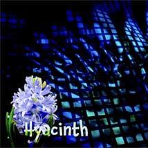 DNA Level3 | Hyacinth